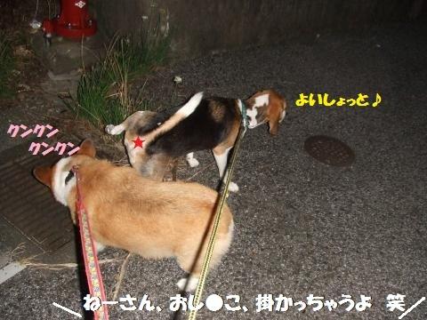 044_convert_20120925232322.jpg