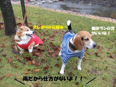 050_convert_20121030014757.jpg