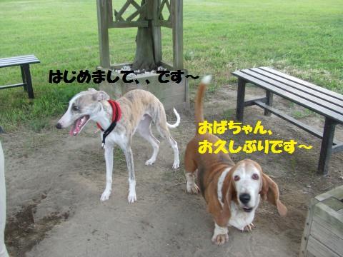 058_convert_20120924010810.jpg