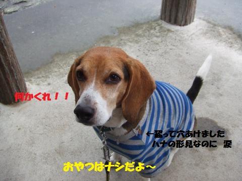 058_convert_20121030015733.jpg