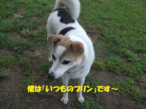 059_convert_20120924010931.jpg