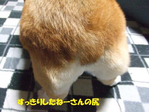 059_convert_20121229021311.jpg
