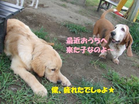 060_convert_20120924011044.jpg