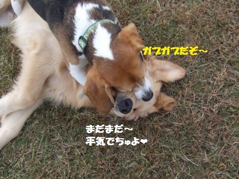 060_convert_20121109015816.jpg