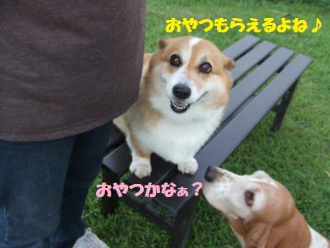 061_convert_20120924011134.jpg
