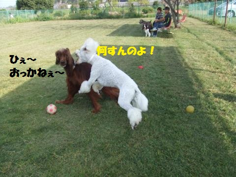 066_convert_20121014225319.jpg