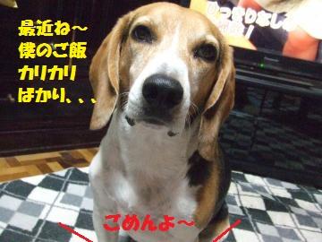 067_convert_20120903003232.jpg