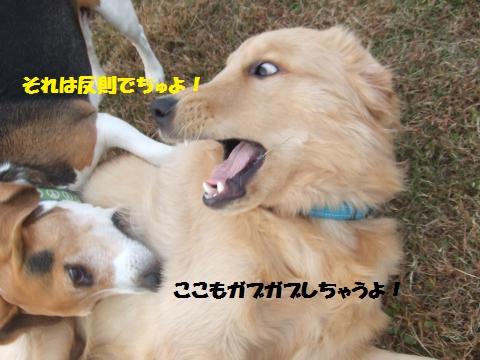 068_convert_20121109015901.jpg