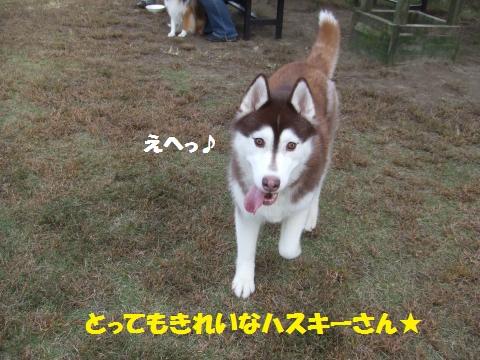 070_convert_20121109020045.jpg