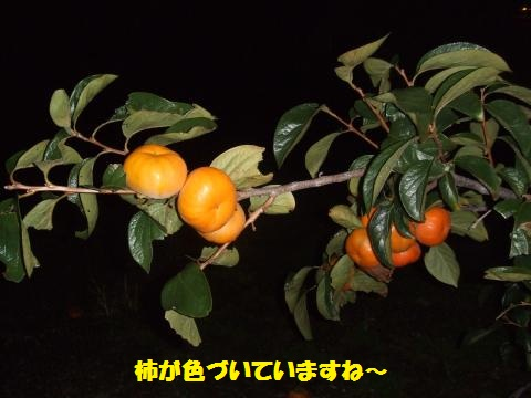 076_convert_20120925232220.jpg