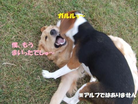 076_convert_20121023002210.jpg