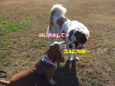 078_convert_20121203001440.jpg