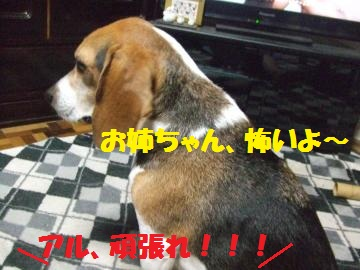 079_convert_20120830223854.jpg