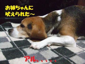 083_convert_20120830223507.jpg