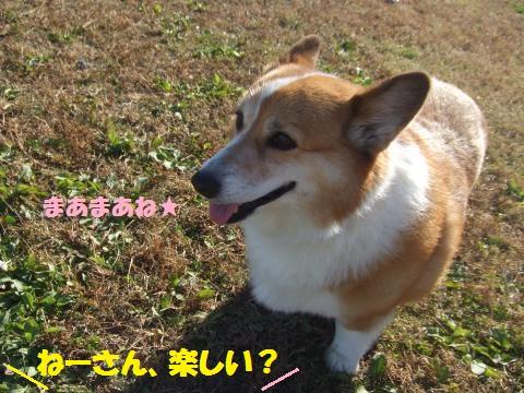 084_convert_20121203000646.jpg