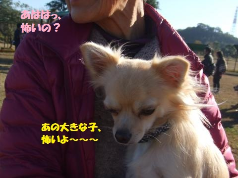 093_convert_20121203000843.jpg