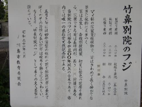 藤 004