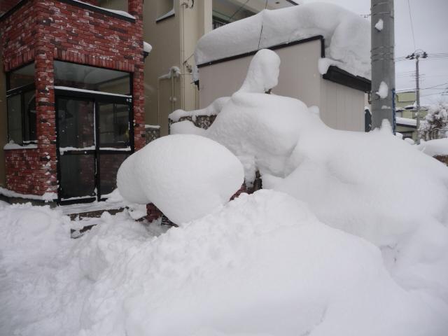 豪雪1月11日