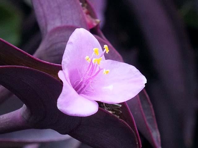 紫御殿(むらさきごてん)(28887 byte)