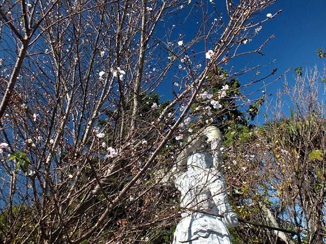 十月桜(134379 byte)