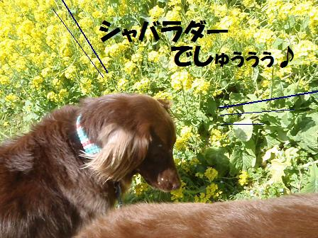 12APR12 406flower