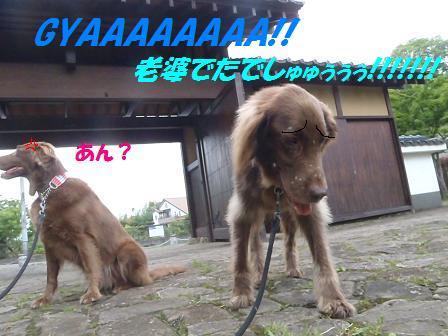 C18MAY12 091RASHO