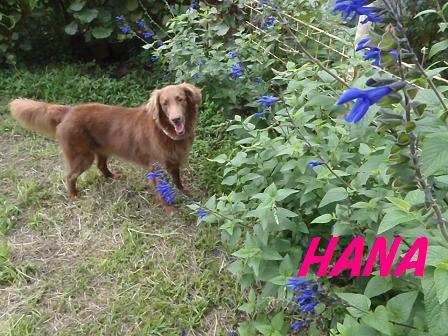 HANA24JULY12 004a