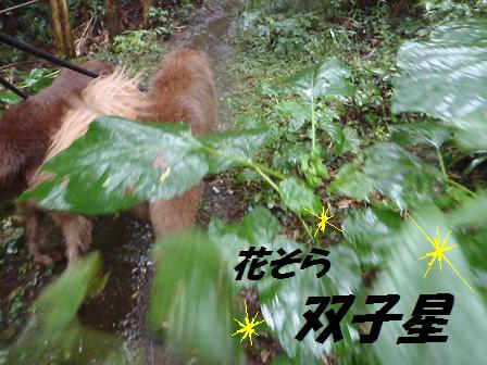 twinstars23SEP12 157