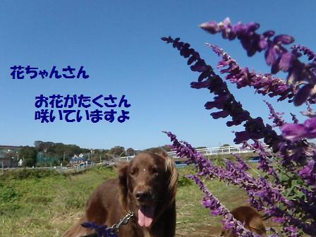 A08OCT12 158flower