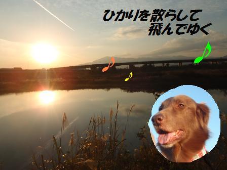 コピー ~ A20NOV12 030sunsetcomet