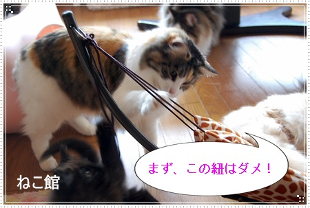 blog15_20130405145455.jpg