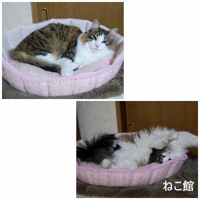 blog2_201401301254007a6.jpg