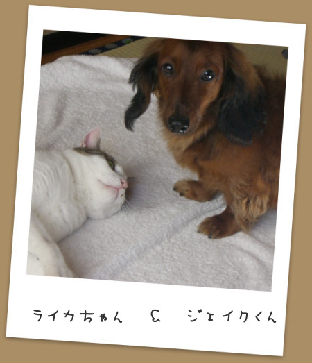 blog5_20130525221806.jpg