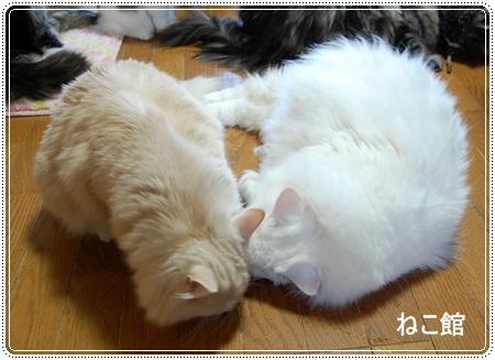 blog8_20130520184534.jpg