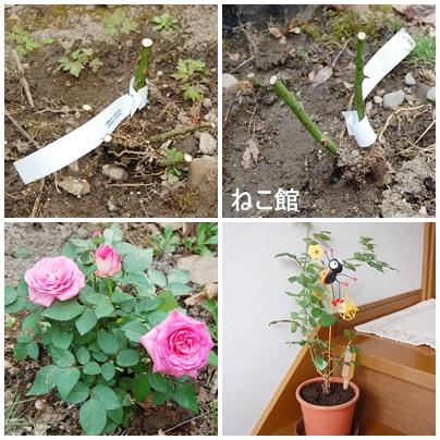 blog_20130418143747.jpg