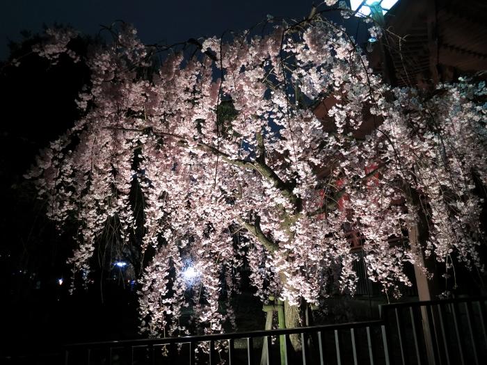 ueno-yozakura_0004f