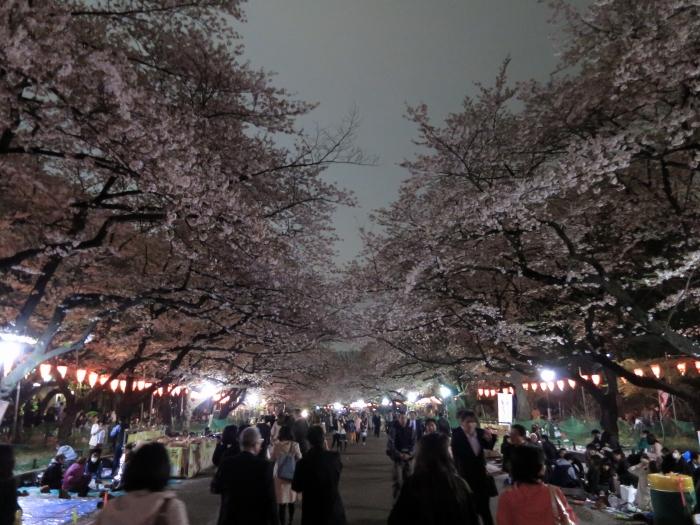ueno-yozakura_0009f