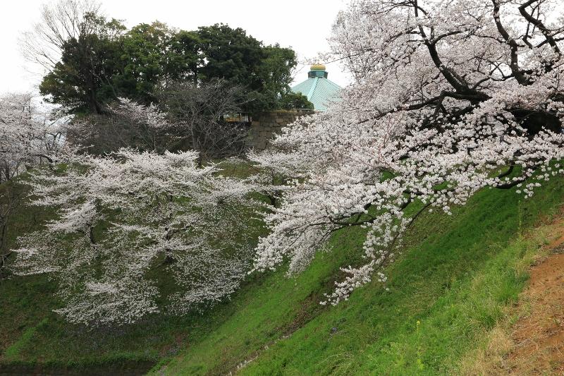 chidorigafuchi_0006f.jpg