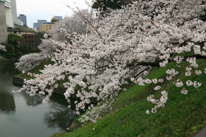 chidorigafuchi_0007f_20130328214349.jpg