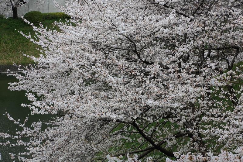 chidorigafuchi_0012f.jpg