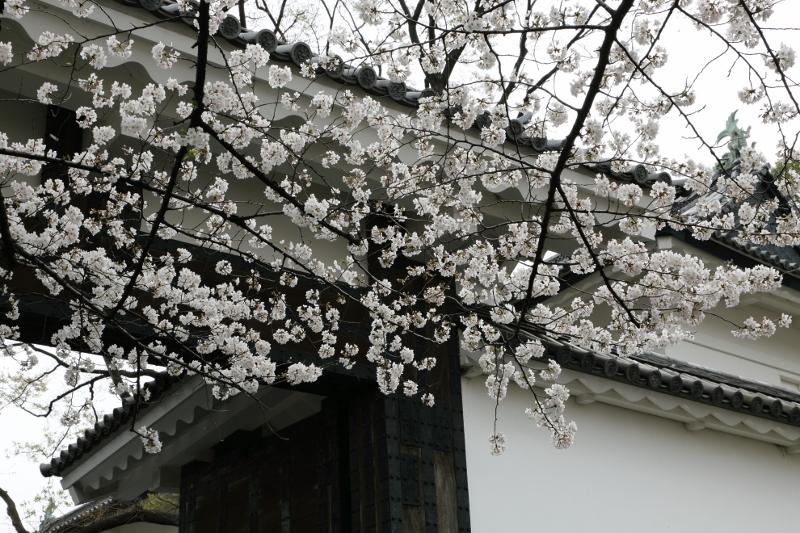 chidorigafuchi_0013f.jpg