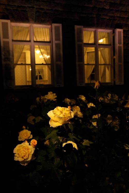 f-rose-n_0027f.jpg