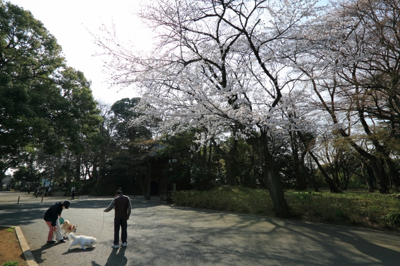 guhoji_0017f.jpg