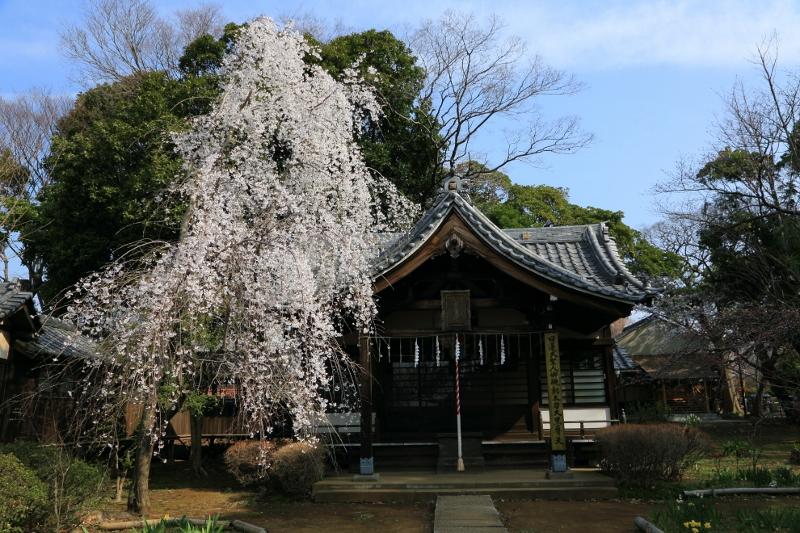 guhoji_0018f.jpg