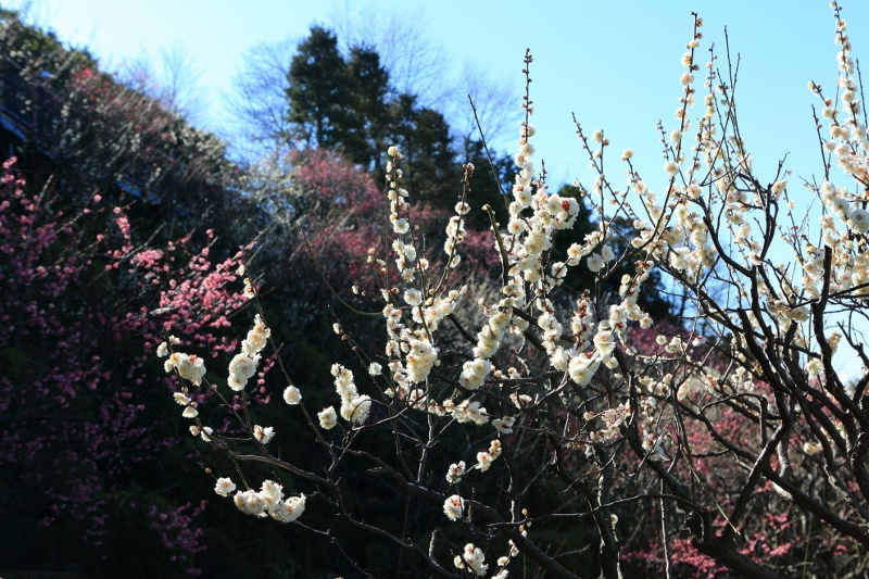ikegami-u_0002f.jpg