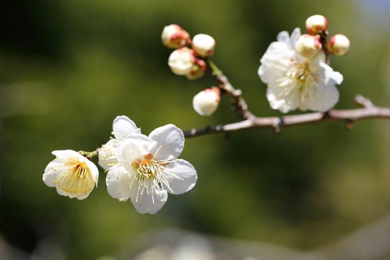 ikegami-u_0006f.jpg