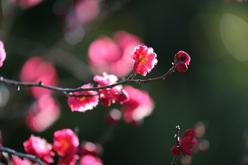 ikegami-u_0008f.jpg