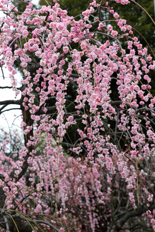 kameido-u_0039f.jpg