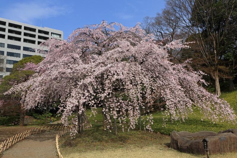 koishikawa-s_0004f.jpg