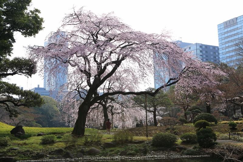 koishikawa-s_0005f.jpg